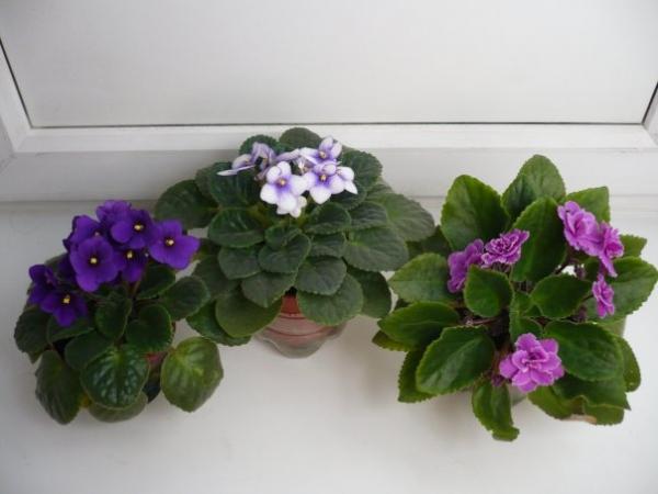 цветы из бисера фиалки.