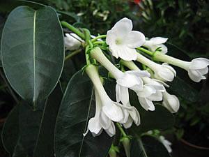 Цветут цветы для красоты, Для мыслей, чистых и прекрасных, Для вечной, праведной любви И для сердец, красивых, ясных.