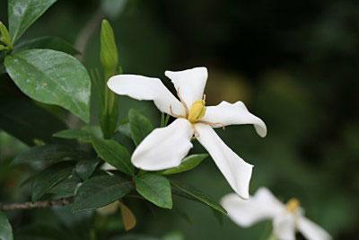 Цветы которые любят солнышко